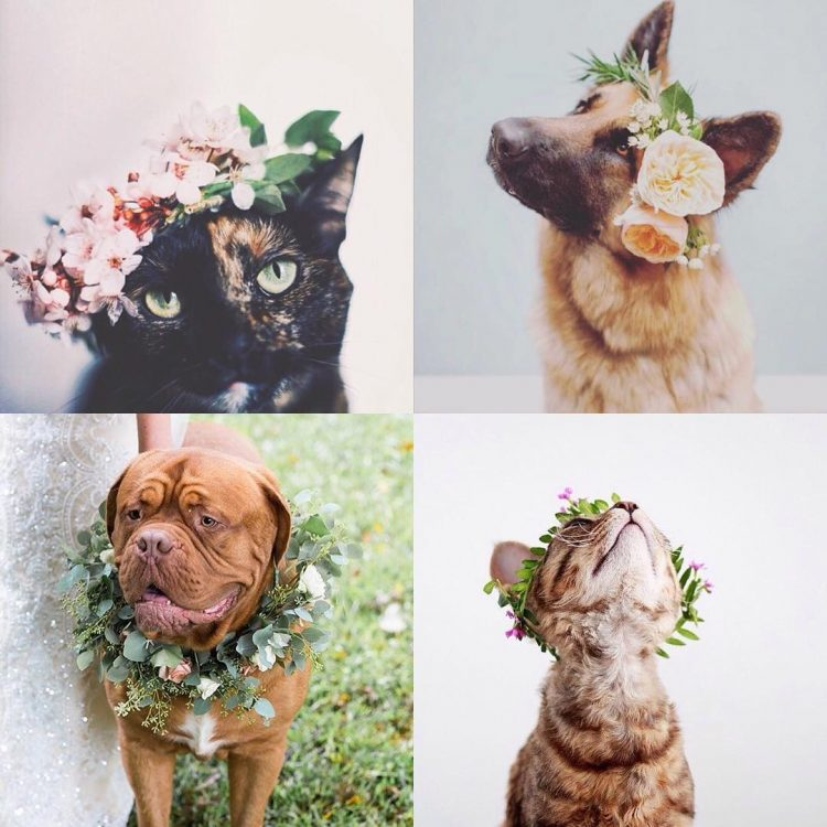 5 Ways to Incorporate Your Pet into Your Wedding Ceremony | Lowcountry Bride